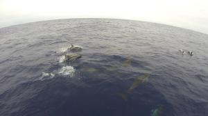 Lots of encounters with  Dolphin playing off the bow...